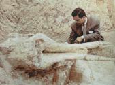 restos de mamut madrid 1.jpg