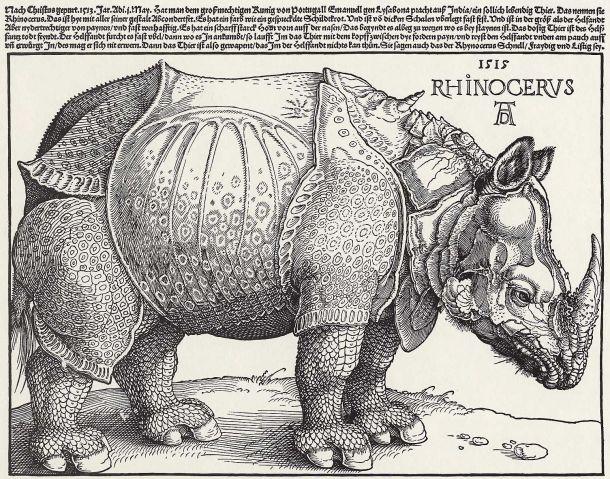 rinoceronte-durero