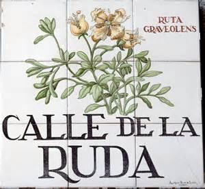 calle-de-la-ruda-1